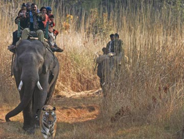 bandhavgarh wildlife tour from Delhi
