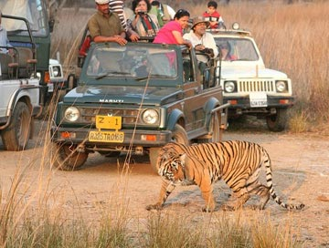 ranthambore wildlife tour from Delhi