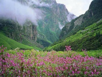 uttranchal valley of flowers tour